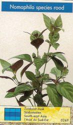 Nomaphila species rood