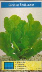 Samolus floribundus