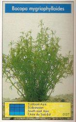 Bacopa mygriophylloides