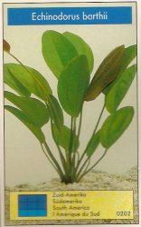 Echinodorus barthii