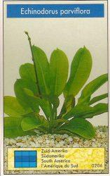 Echinodorus parviflora