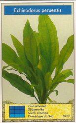 Echinodorus peruensis