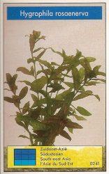 Hygrophila rosaenerva