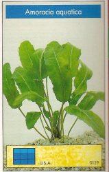Amoracia aquatica